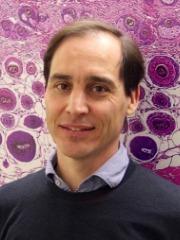 Voets PhD, Prof. Thomas